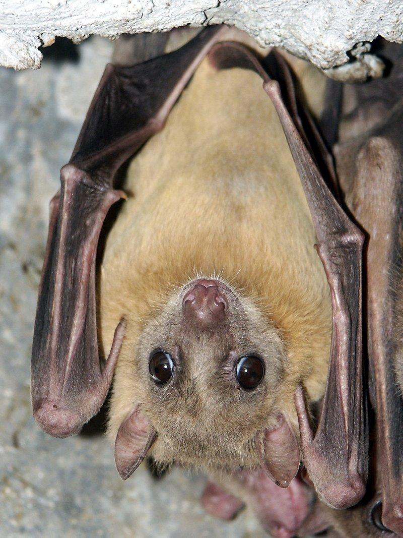 Bats Citadel Berlin